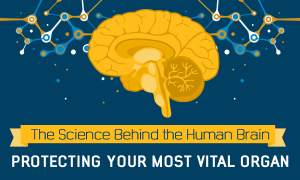 The science behind the human brain [infographic]